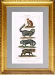Кошки. 1827г. Буффон. Старинная гравюра 19 века - антикварный подарок любителю кошек