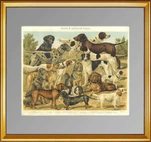 Собаки охотничьи. 1897г. Бунгартц . Xромолитография. Антикварный подарок охотнику