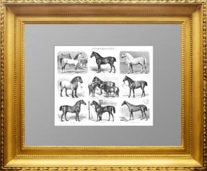 Породы лошадей. 1895г. Торцовая гравюра на дереве