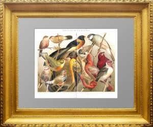Экзотические комнатные птицы. 1887г. Xромолитография. Антикварный подарок женщине