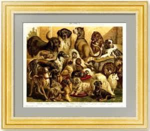 22 породы собак. 1887г. Мютцель. Антикварная литография