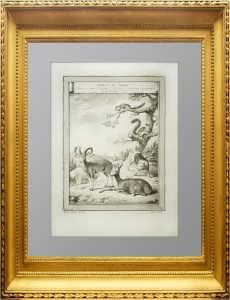 Животные Сибири. Старинная гравюра. 1768г. Беллин. Антикварный подарок охотнику