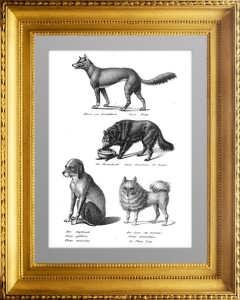 Породы собак 1. Динго, овчарка, охотночья собака... 1827г. Бродтманн. Старинная литография