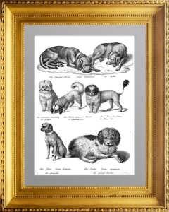 Породы собак 3. Mопс, пудель... 1827г. Бродтманн. Старинная литография
