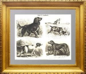 Породы охотничьих собак. 1887г. Замби. Старинная гравюра 19 века - антикварный подарок
