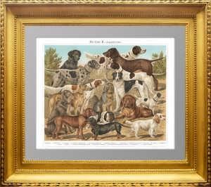 Породы собак. Охотничьи. 1897г. Бунгартц . Xромолитография. Антикварный подарок охотнику