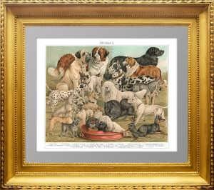 Породы собак. Служебные и декоративные. 1897г. Бунгартц . Xромолитография