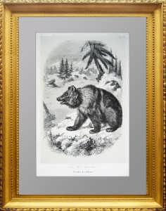 Сибирский бурый медведь. 1855г. Оригинальная старинная литография. Подарок охотнику