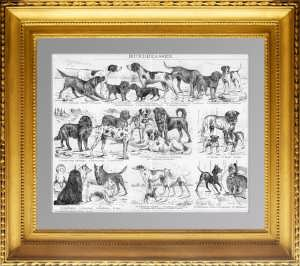 Породы собак. Старинная гравюра. 1895г. ВИП подарок любителю собак