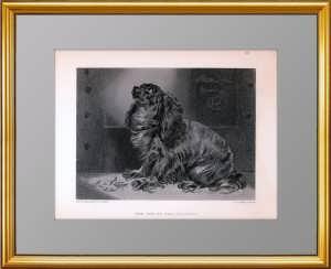 Питомец герцогини. Кавалер Кинг Чарльз Спаниель. 1878г. Ландсир/Льюис. Музейный экземпляр