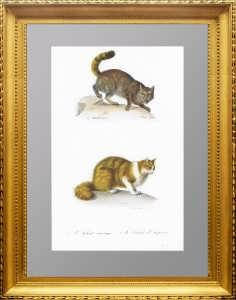 Дикая и ангорская кошки. 1835г. Менье. Старинная гравюра 19 века - антикварный подарок