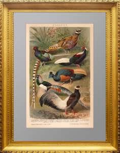 """Старинная литография """"Фазаны"""". 1895г. Мютцель. Подарок охотнику"""