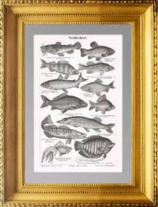 Прудовое рыбоводство. 1896г. D. Антикварная гравюра.