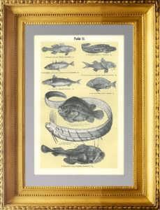 1899г. Рыбы 3. Антикварная гравюра.
