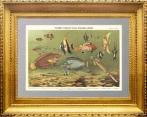 Яркоокрашенные рыбы южных морей. 1899г. Старинная литография