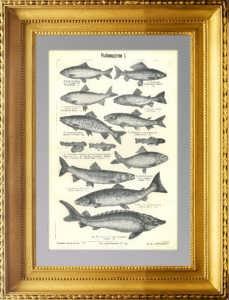 Рыбоводство. 1903г. Антикварная гравюра.