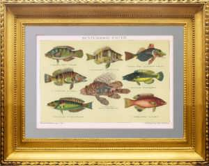 Рыбы с цветным окрасом. 1895г. Старинная литография. Антикварный подарок рыбаку