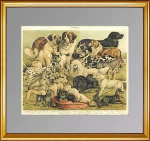 Собаки. Породы. 1897г. Бунгартц . Xромолитография. Антикварный подарок
