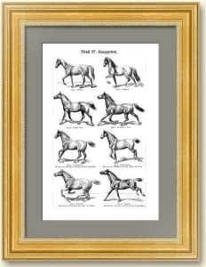Лошади. Аллюры. 1896г. Старинная гравюра