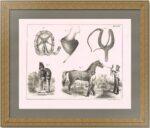 Лошади - уход и содержание. 1840г. Старинная оригинальная литография